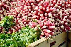 Radishes on market stall. Bunches Radishes on market stall Royalty Free Stock Image