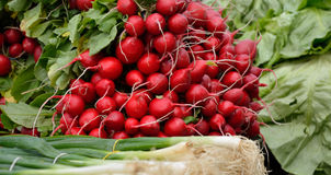 Radishes and Onion. Fresh radishes and organic scallion in spring Stock Photography