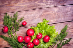 Radishes and onions with parsley Royalty Free Stock Photography