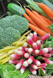 Radishes with other vegetables. Radish bunch and carrots among other vegetables Stock Photography