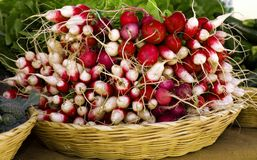 Radishes at Outdoor Market. Display of fresh radishes at an outdoor market Stock Photo