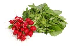 Radishes over white. Raw radishes isolated over white Royalty Free Stock Image