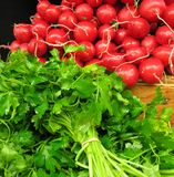 Radishes and parsley. A heap of red ripe radishes (Raphanus sativus) and bunches of fresh parsley Stock Photos