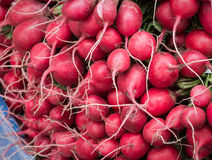 Radishes. A pile of radish bunches at a farmer's market in San Francisco stock image