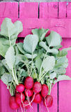 Radishes on a pink board Stock Images