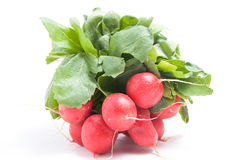 Radishes red Stock Images