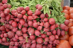 Radishes for sale Stock Images