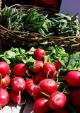 Radishes In The Sunshine Stock Photography