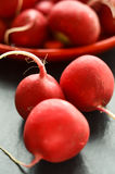 Radishes on a table. Organic radishes on a table Stock Photos