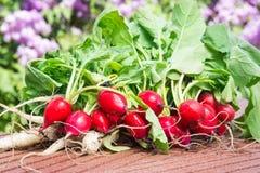 Radishes, turnips, harvest. Radishes and turnips, fresh harvest Royalty Free Stock Photography