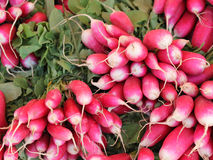 Radishes vermelhos brilhantes Foto de Stock Royalty Free
