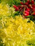 Radishs en gele andijvie Stock Foto's