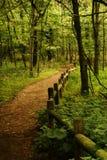 Radnor湖在纳稀威田纳西,树木繁茂的被操刀的道路在森林里 免版税库存照片