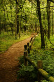 Radnor sjö i nashville Tennessee, skogsbevuxen fäktad bana i skogen Royaltyfria Foton