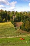 Radocelo berglandskap på den soliga dagen för höst Arkivfoton