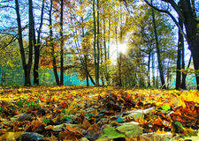 Radura in autunno Fotografia Stock Libera da Diritti