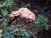 Radura con i funghi Immagine Stock Libera da Diritti