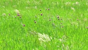 Radura con le erbe ed i fiori della molla archivi video