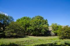 Radura davanti agli alberi Fotografia Stock