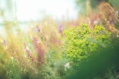 Radura dei fiori Immagini Stock