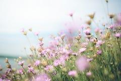 Radura dei fiori Fotografie Stock Libere da Diritti
