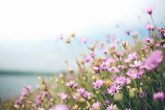 Radura dei fiori Fotografie Stock