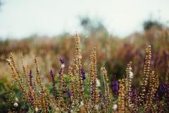 Radura dei fiori Fotografia Stock