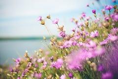 Radura dei fiori Fotografia Stock Libera da Diritti