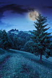Radura della foresta in ombra degli alberi alla notte Immagini Stock