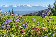 Radura di fioritura nelle montagne di Caucaso Fotografia Stock Libera da Diritti