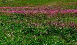 Radura nelle montagne, Dombay Fotografia Stock Libera da Diritti