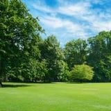 Radura verde coperta di erba in parco Spazio libero per testo Fotografia Stock