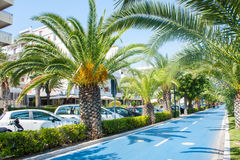Radweg auf der adriatischen Seeküste Küste der Stadt Alba Adriatica in Italien, Palme treas auf den Seiten, sonniger Tag des Somm Stockfotos