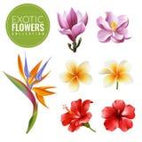 Raelistic exotisk blommauppsättning royaltyfri illustrationer