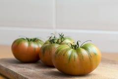 Raf pomidory, sałatek zielenie Fotografia Royalty Free