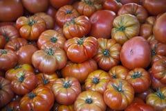 RAF Tomatoes Fotografia Stock Libera da Diritti