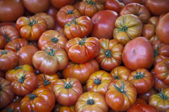 RAF Tomatoes Royalty Free Stock Photography