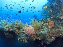 rafa koralowa Zdjęcie Stock
