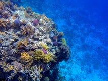 rafa koralowa Zdjęcie Royalty Free