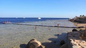 Rafa koralowa zdjęcie wideo