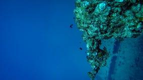 Rafa koralowa blisko do wraku w oceanie obrazy stock
