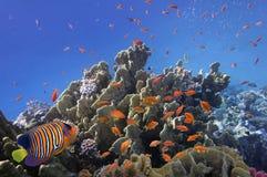 Rafa koralowa, Czerwony morze, Obrazy Royalty Free