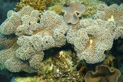 rafa koralowa gąbka Fotografia Royalty Free