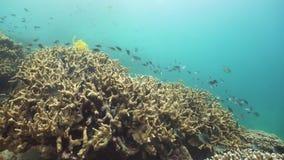 Rafa koralowa i tropikalny rybi podwodny Camiguin, Filipiny zbiory wideo
