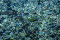 Rafa koralowa pod wodą, czerwony morze Obrazy Royalty Free