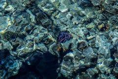 Rafa koralowa pod wodą, czerwony morze Zdjęcie Stock