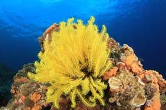 Rafa Koralowa Podwodna Obraz Royalty Free