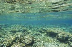 rafa koralowa poniższy nawierzchniowy odgórny tropikalny Obrazy Stock