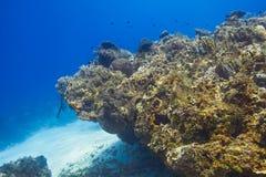Rafa koralowa punkt obrazy stock