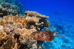 Rafa koralowa tropikalna woda Fotografia Stock